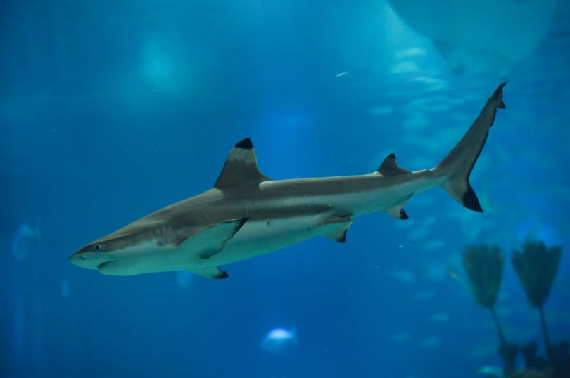 Are there sharks in the Mediterranean in Turkey